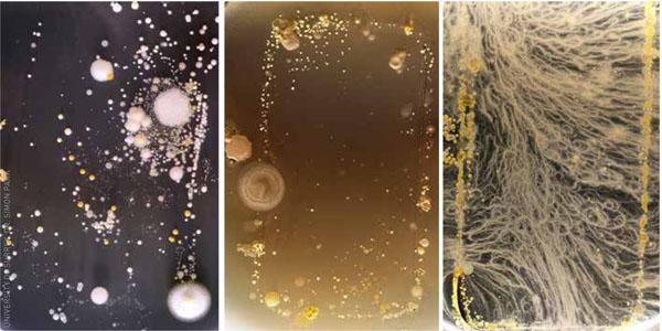 Smartphone bacterien